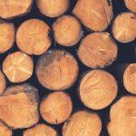 Самые популярные породы дерева и их использование